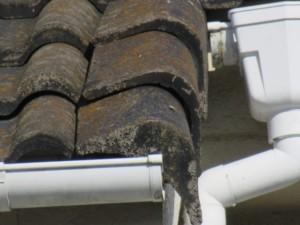 屋根塗装 熊谷市